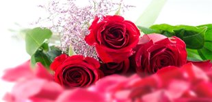 散りばめられた薔薇